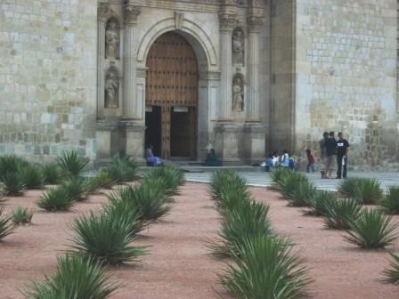 oaxaca cactus catedral