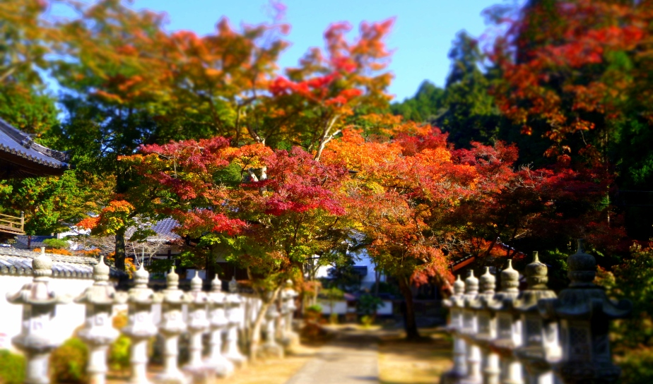 Autumn Colors In Buttsu-ji Temple